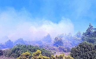 Kuyucak'taki yangında 4 hektar ormanlık alan zarar gördü