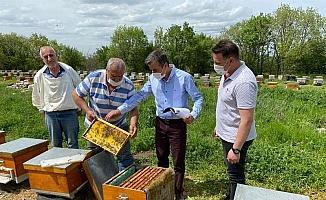 Meşe balı üreten arıcıların saha kontroller yapılıyor