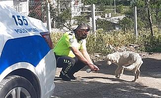Polis, kendi suyunu sıcaktan bunalan köpeğe eliyle içirdi
