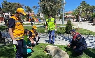 Sokak hayvanları ekibi Burhaniye'de çalışıyor