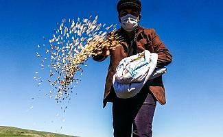 Traktör koltuğuna geçen belediye başkanı asırlık 'kavılca' buğdayını toprakla buluşturdu