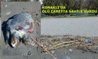 Konaklı'da ölü caretta sahile vurdu