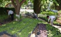 Büyükşehir'den mezarlıklarda ücretsiz çiçek dağıtımı