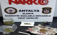Alanya'da esrar partisine polis baskını: 8 gözaltı