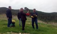 Alanya'da tedavi edilen 2 şahin doğaya salındı