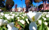 Alanya'da baharın müjdecisi laleler çiçek açtı