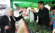 Alanya'da 15 bin su kabağı fidanı dağıtıldı