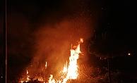 Gazipaşa'da yangın paniği!