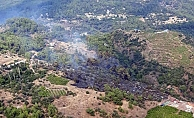 Ormanlık alanda yangın paniği