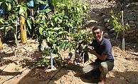 Alanya'da 24 çeşit tropik meyve yetiştiriliyor