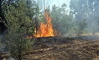 Alanya'da zeytin ve çam ağaçları yandı!