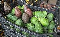 Alanya'da avokado hırsızı uygulamada yakalandı