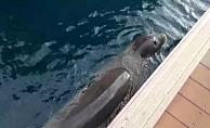 Akdeniz Fok'unun marina turu