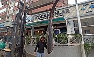 Balıkçıların ağına 200 kiloluk köpek balığı takıldı