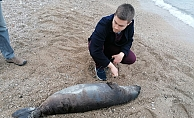 Öü Akdeniz foku kıyıya vurdu