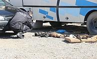 9 köpek ve 2 kedi yavrusu zehirlenerek öldürüldü
