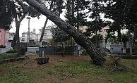 Alanya'da aşırı yağış mezarlıktaki ağaçları devirdi!
