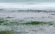 Alanya'da dolu yağışı sahilleri beyazva bürüdü