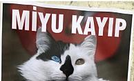 Alanya'da tatlı kedi 'Miyu' aranıyor