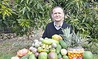 Alanya ve Gazipaşa'da tropikal meyveler yok satıyor
