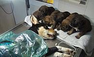 Vicdansızların vurduğu sokak köpeği sağlığına kavuştu yeni sahiplerini bekliyor