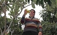 Türkiye'de ilk olarak o meyvenin hasadı Alanya'da başlandı