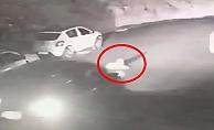 Alanya'da vicdansız sürücü köpeği ezip kaçtı!