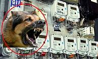 Alanya'da elektrik sayacını okumak isterken köpeğin saldırısına uğradı!