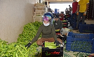 Antalya'da çiftçi üretime ara vermedi