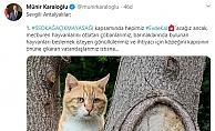 Antalya Valisi'nden evcil ve sokak hayvanları için önemli karar
