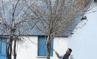 Başkan Yücel, yaylada ağaç budadı