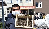 Binlerce arının şok eden ölümü...Ölen arılarıyla müdürlüğe geldiler