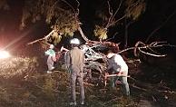 Orman yangınında bir ev ile 2 dönüm alan zarar gördü