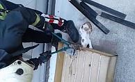 Alanya'da itfaiye yavru sıkışan kediyi kurtardı