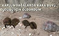 Alanya'da kaplumbağa katliamının şüphelisi yakalandı!