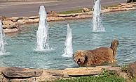 Antalya'da dereceler 37'yi gösterdi, sokak köpekleri ve kargalar süs havuzunda serinledi