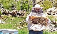 Antalya'da sıcaklıklar arttı, arılar yaylaya taşındı