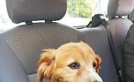 Alanya'da kayıp köpek Liza'yı bulana 500 TL ödül!