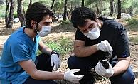 Ormanda bulunan yaralı karga tedaviye alındı