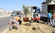 Alanya Belediyesi'nden bitkilendirme çalışması