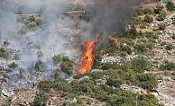Alanya'da çalı yangını ormana sıçramadan söndürüldü