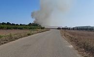 Anız yangını sera ve zeytin ağaçlarına zarar verdi
