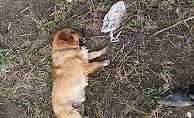 Yumurtasını çalan yavru köpeği pompalı tüfekle vurarak öldürdü