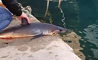 Sahilde ölü köpekbalığı bulundu
