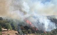 Orman yangını paniğe neden oldu!