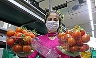 Türkiye'nin sebze ihtiyacı için gece gündüz demeden çalışıyorlar