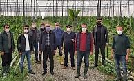 AK Partili Aydın muz üreticilerinin sorunlarını dinledi