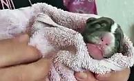 Çöpte bulunan yavru köpeği sahiplenip biberon ve şırıngayla beslediler