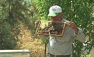 Arı dolu çıtayı öpüp, arıları eliyle tutuyor