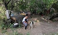 Ölüme terk edilen köpeklere mahalleli sahip çıktı